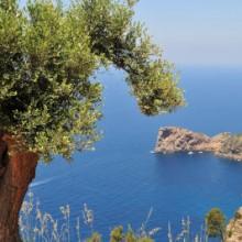 Pour la Méditerranée